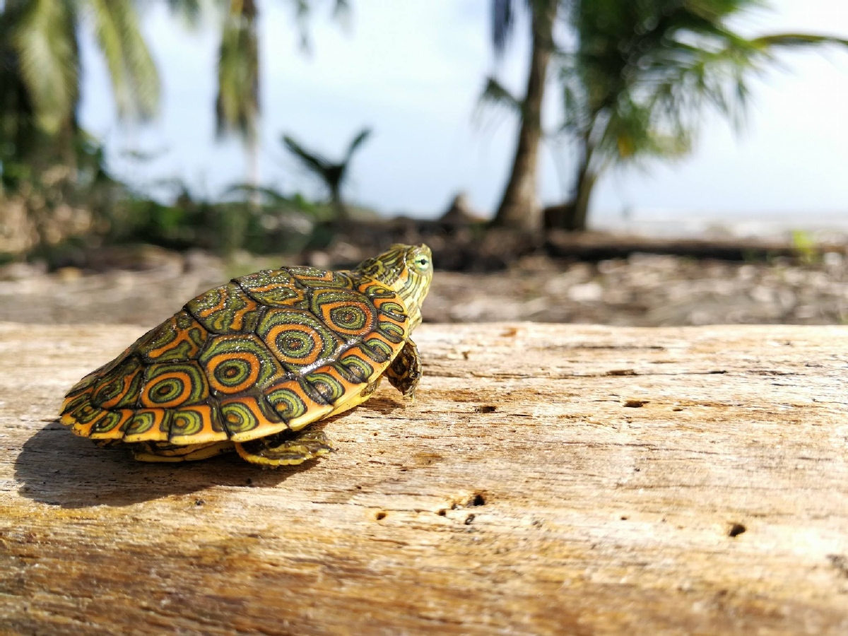6 Options to Volunteer with Turtles