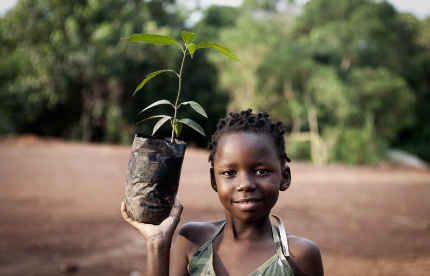 Uganda Is Losing Its Trees & How This Affects You
